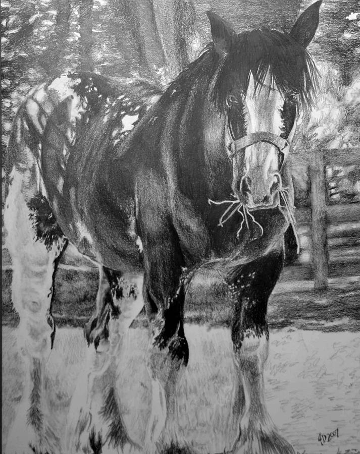 Horse Drawing - Clydesdale by Darcie Duranceau