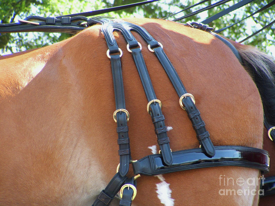 Clydesdale Tack by Rich Collins