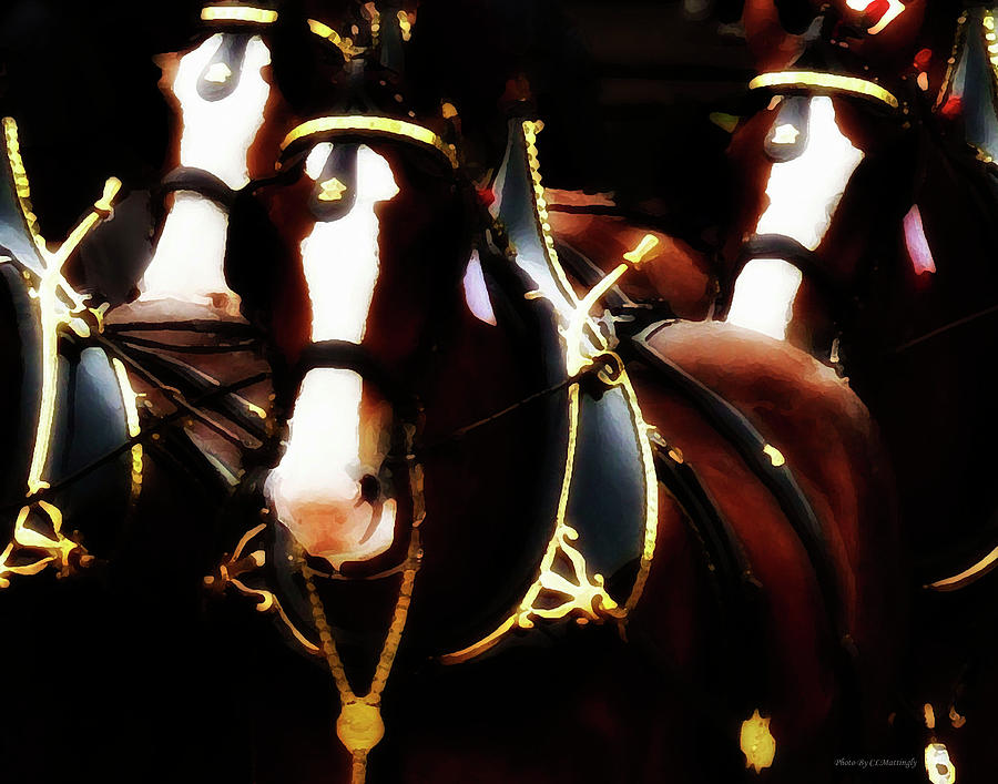 Clydesdale Photograph - Clydesdales by Coleman Mattingly
