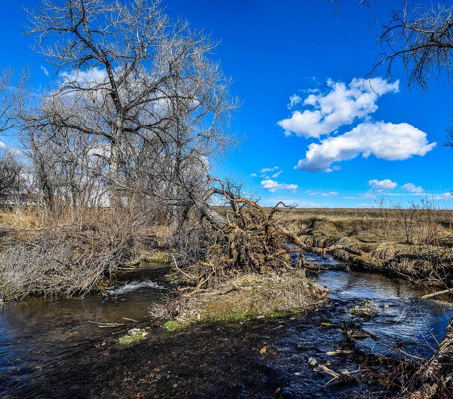 Creek Photograph - Coal Creek by Michael Putthoff