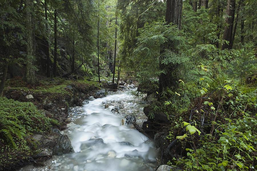 Coast Redwood Forest Big Sur California Photograph by Sebastian Kennerknecht