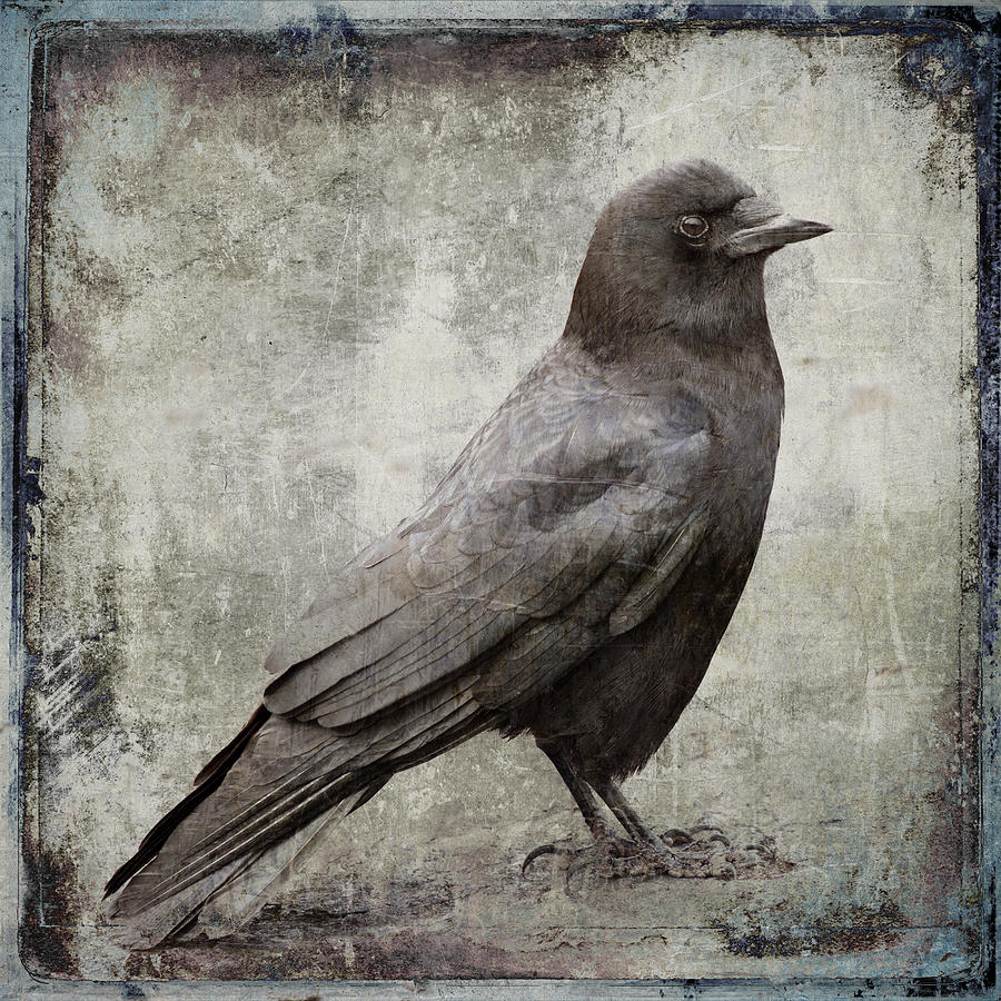 Crow Photograph - Coastal Crow by Carol Leigh