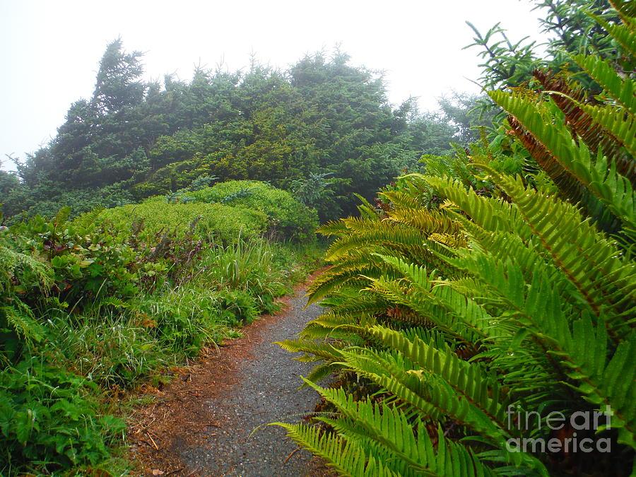 Coastal Ferns Of Oregon by Paddy Shaffer