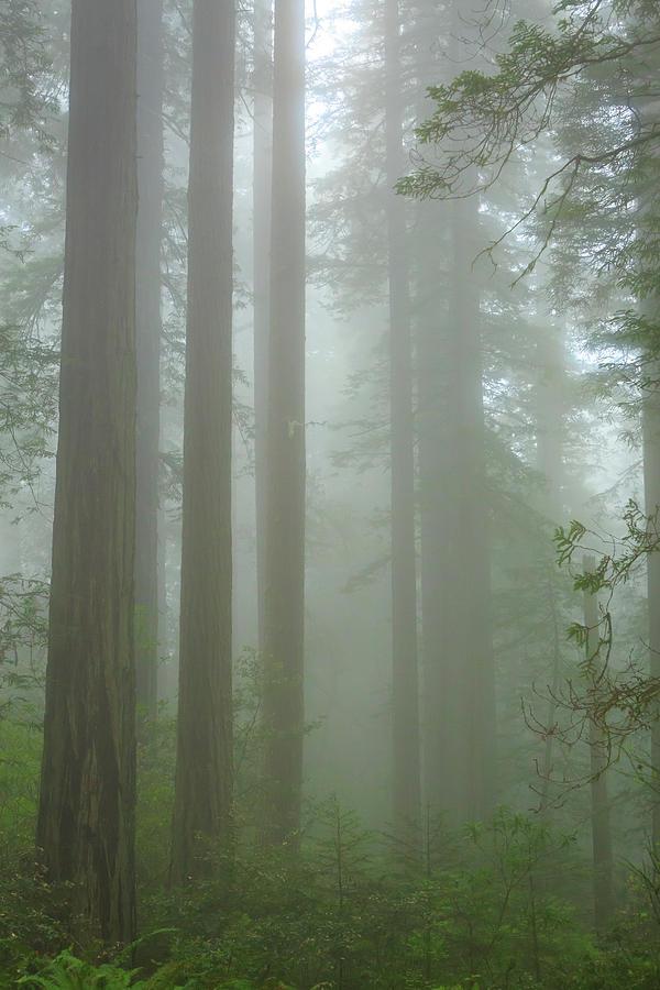 California Photograph - Coastal Mist by Karma Boyer
