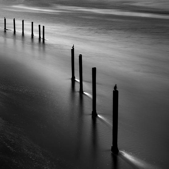 B&w Photograph - Coastal Pilings by Cole Thompson