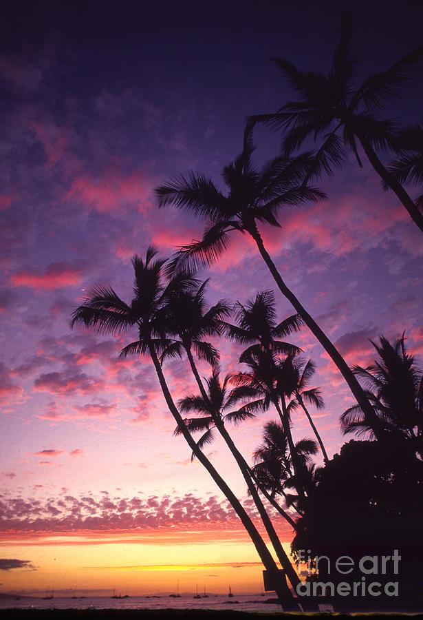 Boat Photograph - Coastline Palms by Ron Dahlquist - Printscapes