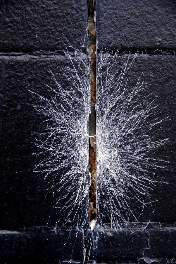 Black Photograph - Cobweb by Sharrell Holcomb
