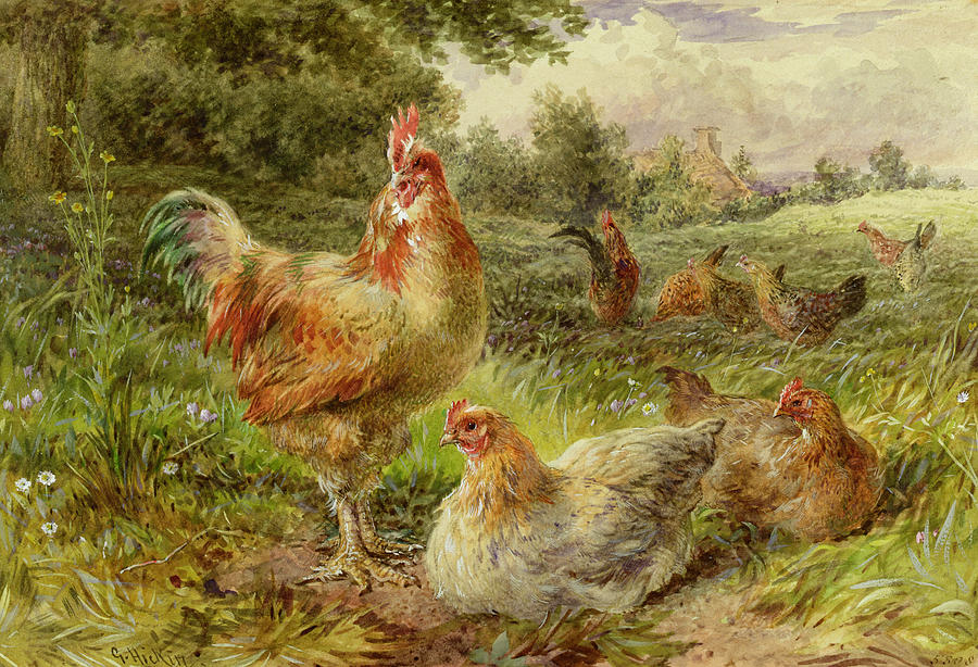 Cochin Painting - Cochin China Fowls by George Hickin