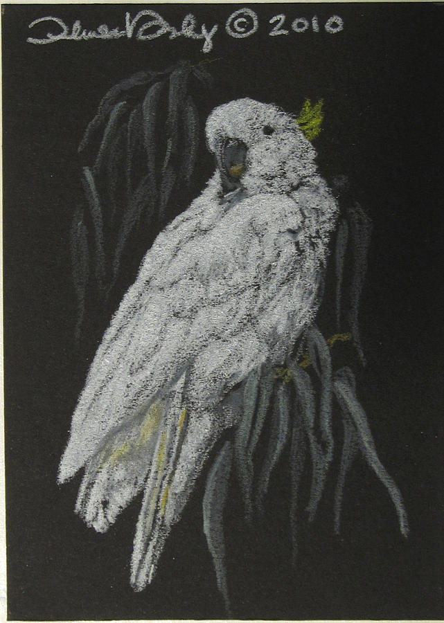 Bird Drawing - Cockatoo - Mini Art by Theresa Higby