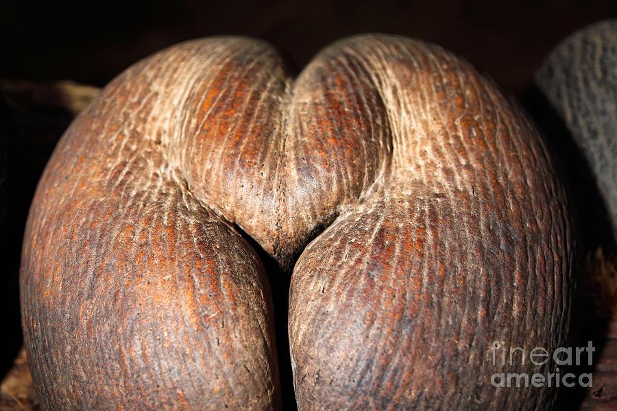 Nature Photograph - Coco de Mer  by Juergen Held