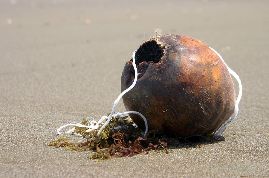 Photographer Photograph - Coconut Beach by Jez C Self