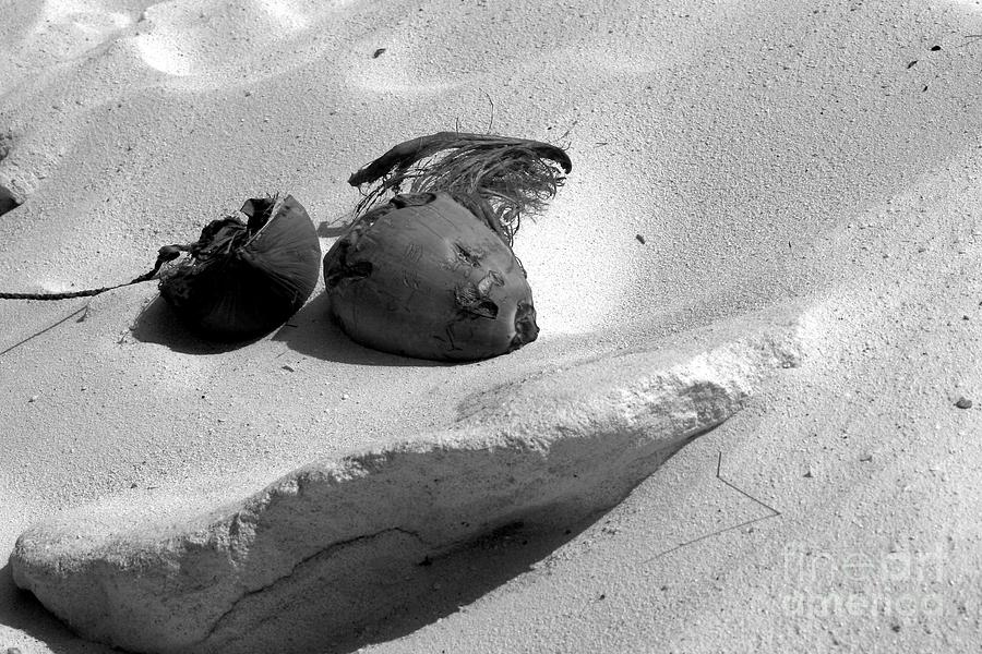 For Sale Photograph - Coconut On The Beach by Robert Wilder Jr