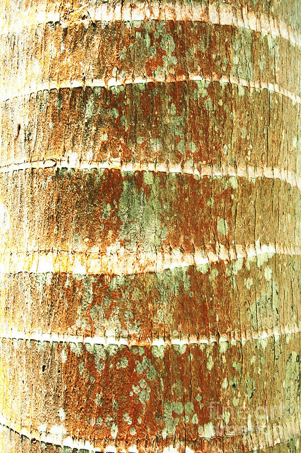 Abstract Photograph - Coconut Palm Bark 2 by Brandon Tabiolo - Printscapes