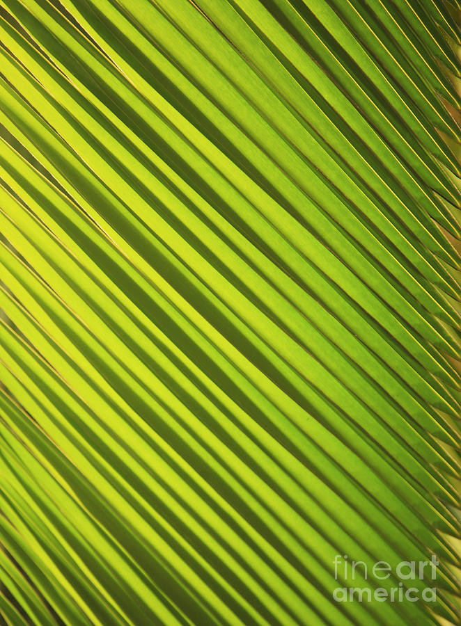 Abstract Photograph - Coconut Palm by Brandon Tabiolo - Printscapes