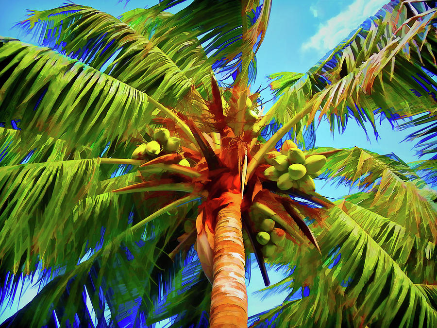 Coconuts Photograph - Coconut Palm in the Summertime by Jennifer Stackpole