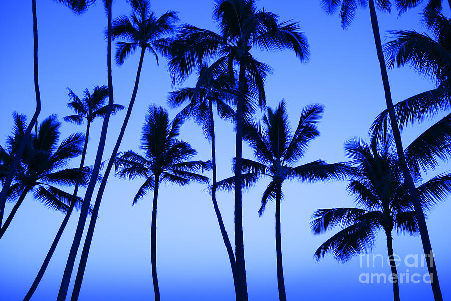 Afternoon Photograph - Coconut Palms At Dawn by Dana Edmunds - Printscapes