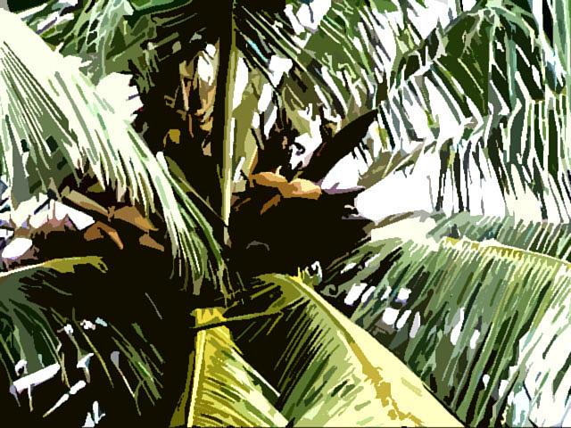 Coconut Photograph - Coconut Tree by Padamvir Singh