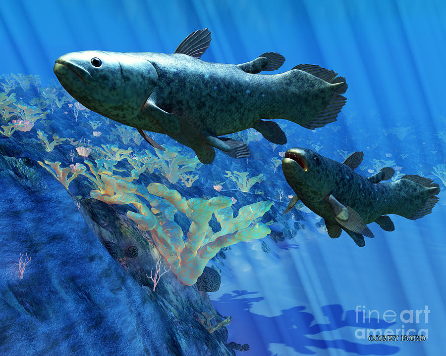 Fish Painting - Coelacanth Fish by Corey Ford
