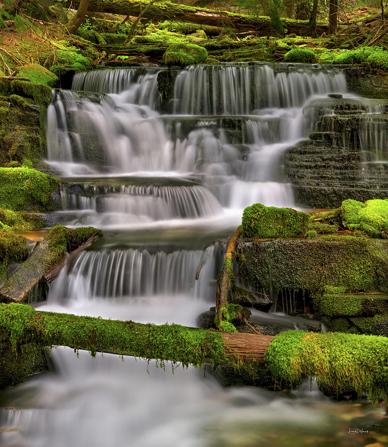 Nature Photograph - Coeur D Alene Forest Waterfall by Leland D Howard