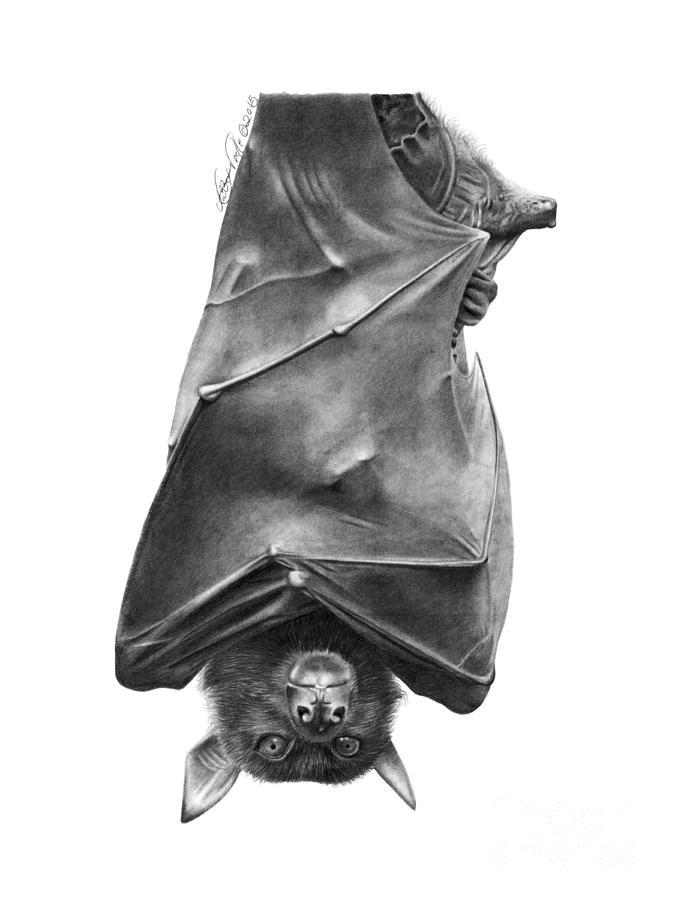 Coffie the Fruit Bat by Abbey Noelle