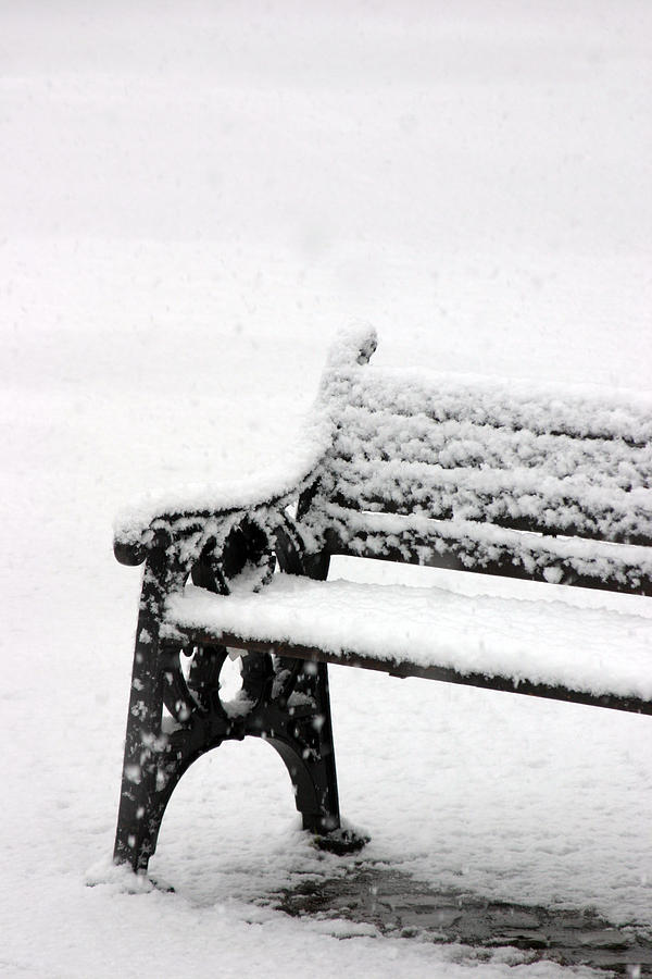 Photographer Photograph - Cold Bench by Jez C Self