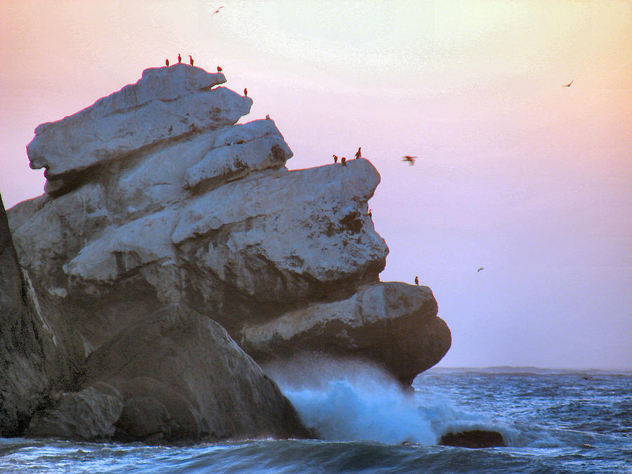 Seabirds Photograph - Cold Grey Dawn by Dana Patterson
