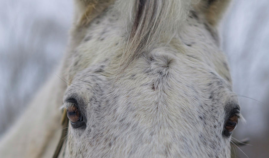 Horse Photograph - Cold Outside by JAMART Photography