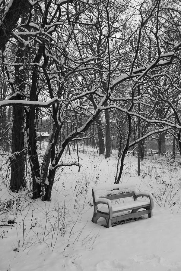 Park Photograph - Cold Seat by Lauri Novak
