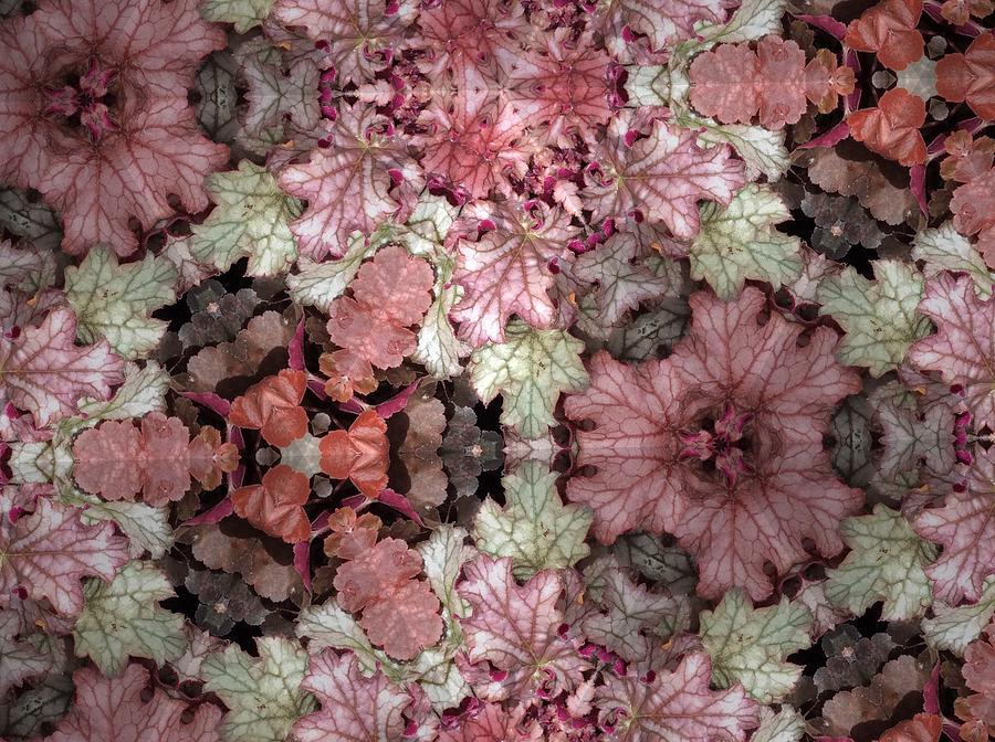 Plants Photograph - Coleus Patterns by Sylvan Adams