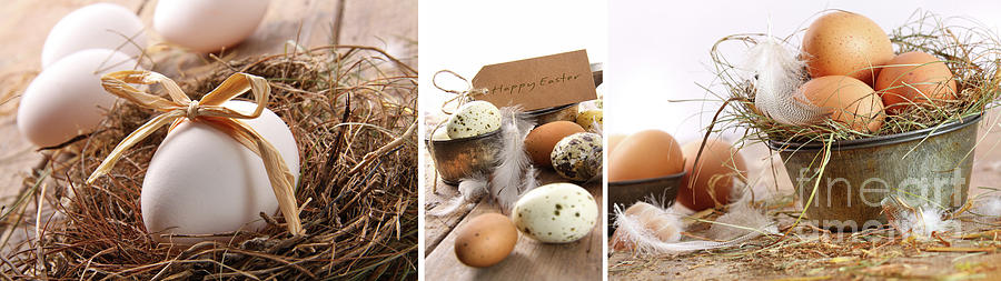 Background Photograph - Collage Of Assorted Egg Images  by Sandra Cunningham