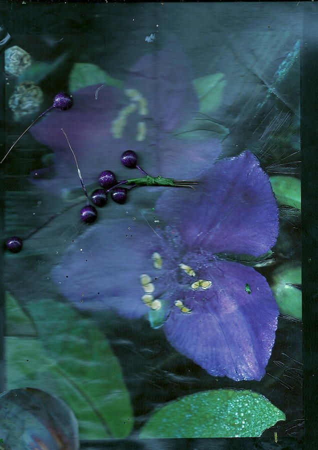 Purple Mixed Media - Collage Purple And Green by Anne-Elizabeth Whiteway