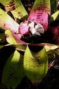 Hawaii Photograph - Collection Flower by Rachel Andersen
