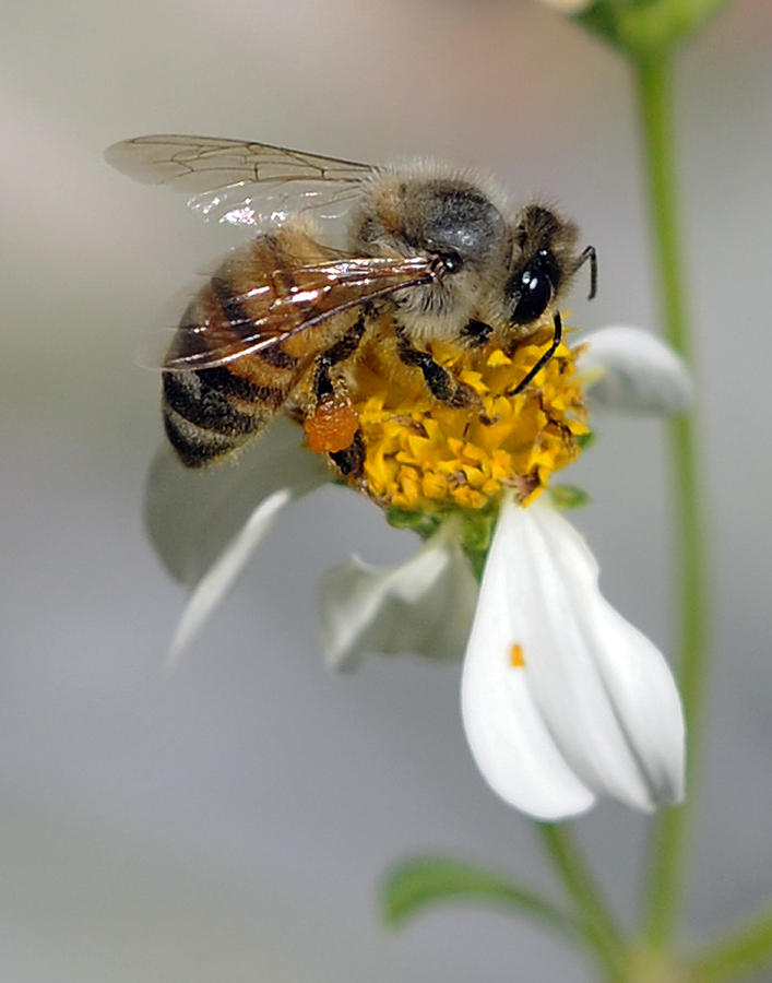 Bee Photograph - Collections by Keith Lovejoy