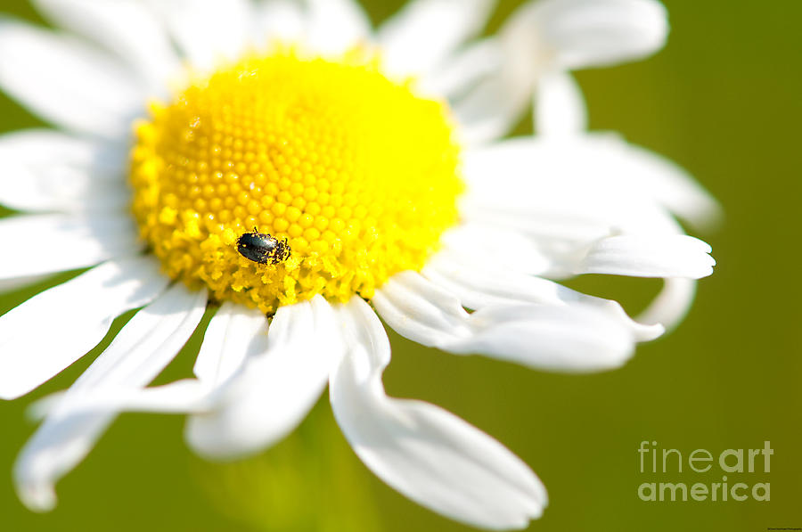 Flower Photograph - Collector by Grant Muirhead