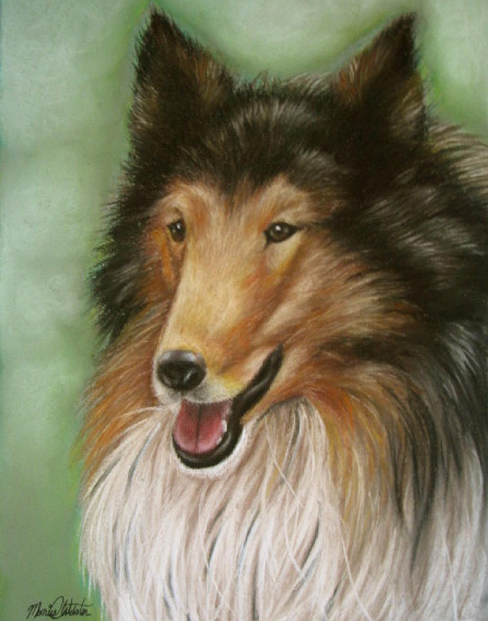 Dog Painting - Collie by Monica  Webster