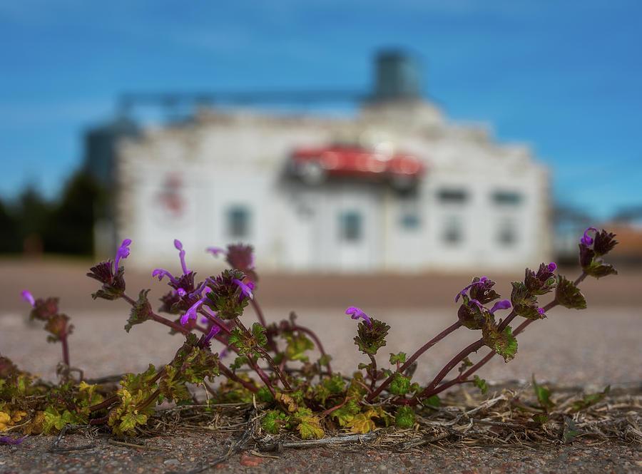 Collyer Sidewalk Blooms Photograph