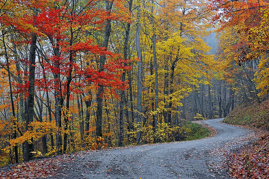 Autumn Foliage Photograph - Color Along Curvy Raod by Alan Lenk