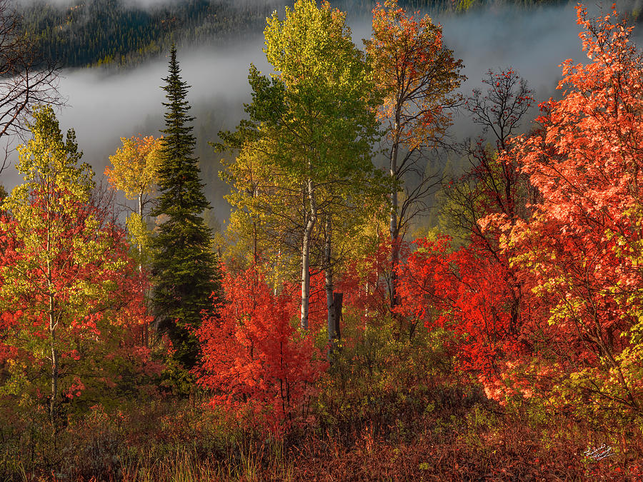 Aspen Forest Photograph - Color And Light by Leland D Howard