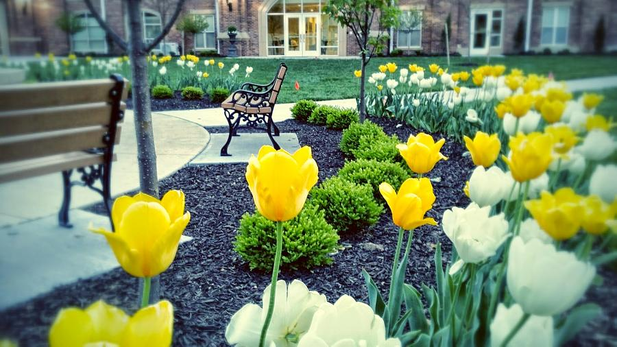 Flowers Photograph - Color At College by Dustin Soph
