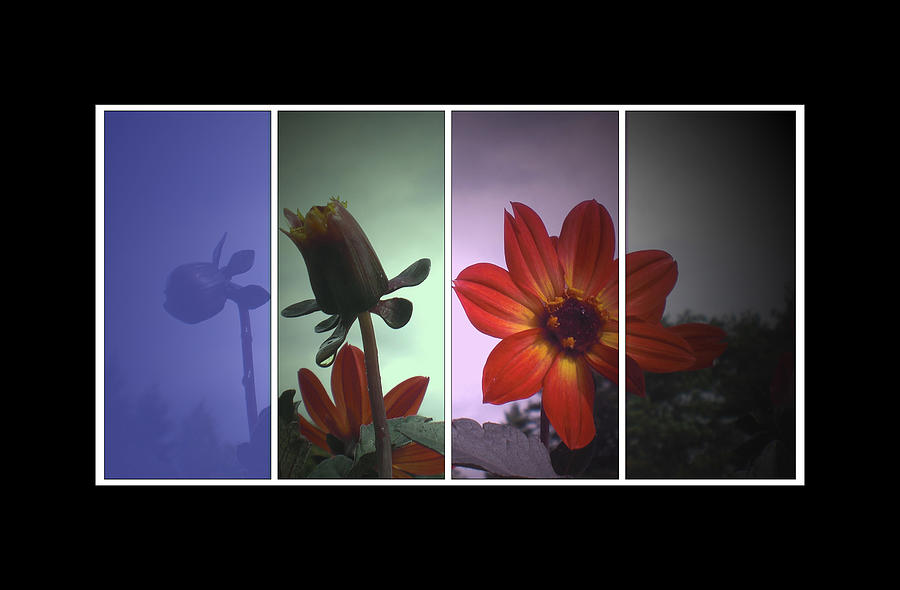 Flowers Digital Art - Color My World by Holly Ethan