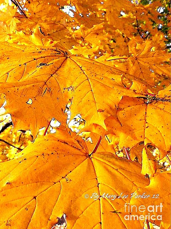 Tree Photograph - Color Of The Leaves by MaryLee Parker