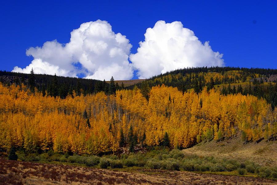 Fall Colors Photograph - Colorado Fall 2 by Marty Koch