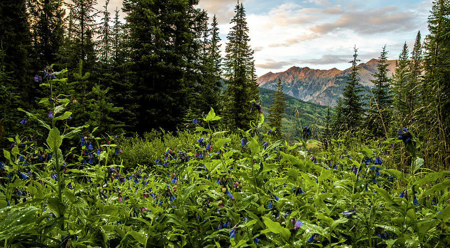 Cloud Photograph - Colorado Summer Flowers by Bryan Toro