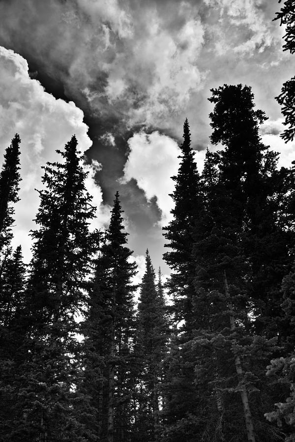 National Park Photograph - Colorado Trees by Patrick  Flynn