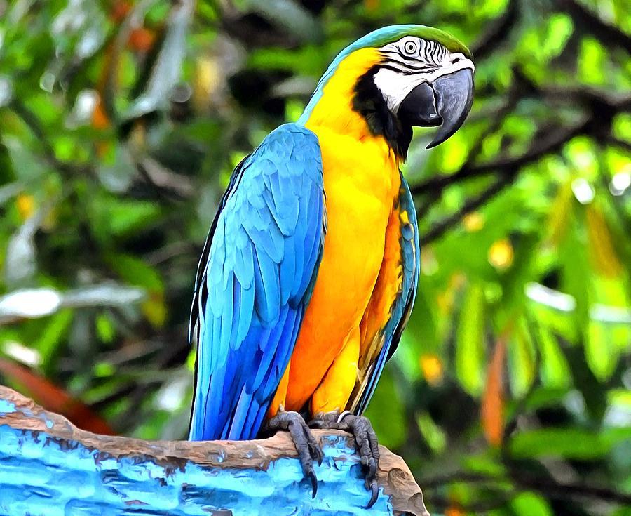 Parrot Bird Digital Art - Colored  by Bliss Of Art