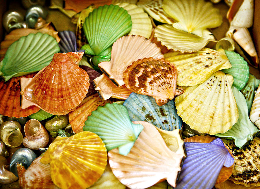 Shell Photograph - Colored Shells by Marilyn Hunt