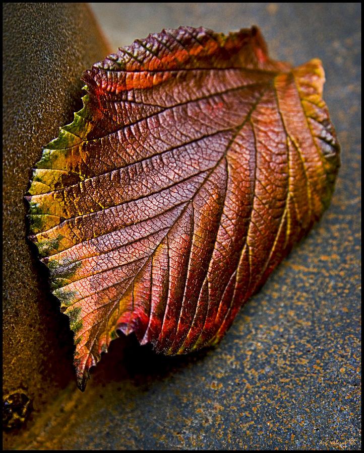 Flora Photograph - Colorfall by Daniel G Walczyk