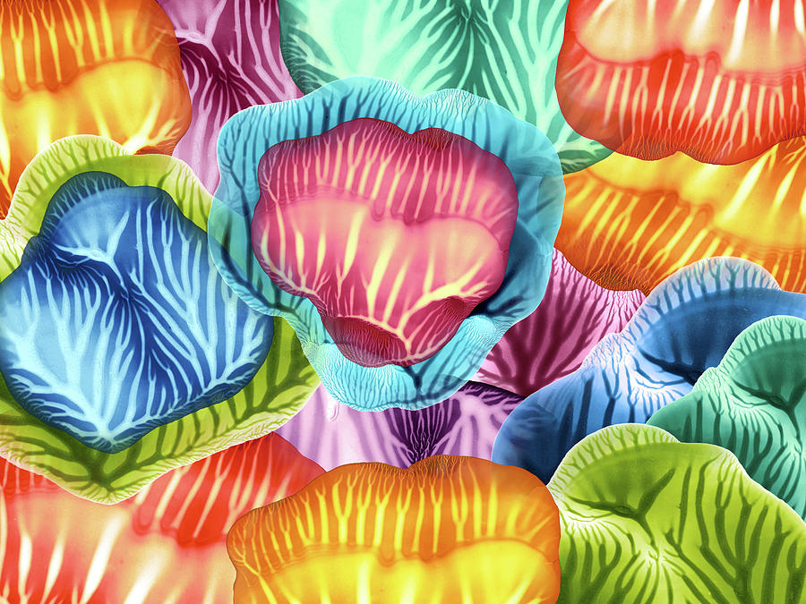 Colorful Abstract Flower Petals by Amy Vangsgard