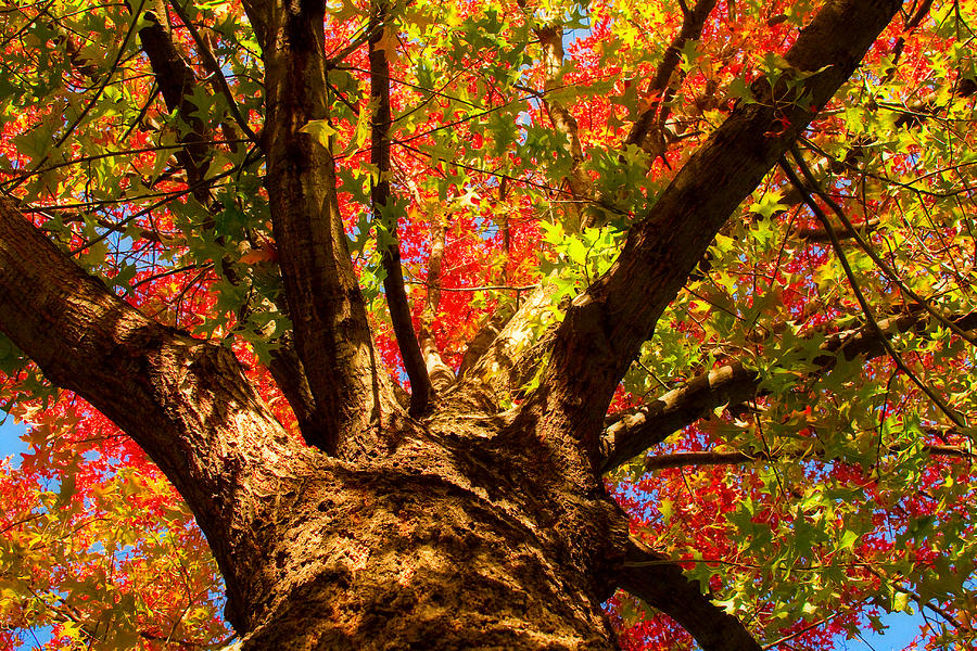 Forest Photograph - Colorful Autumn Abstract by James BO  Insogna