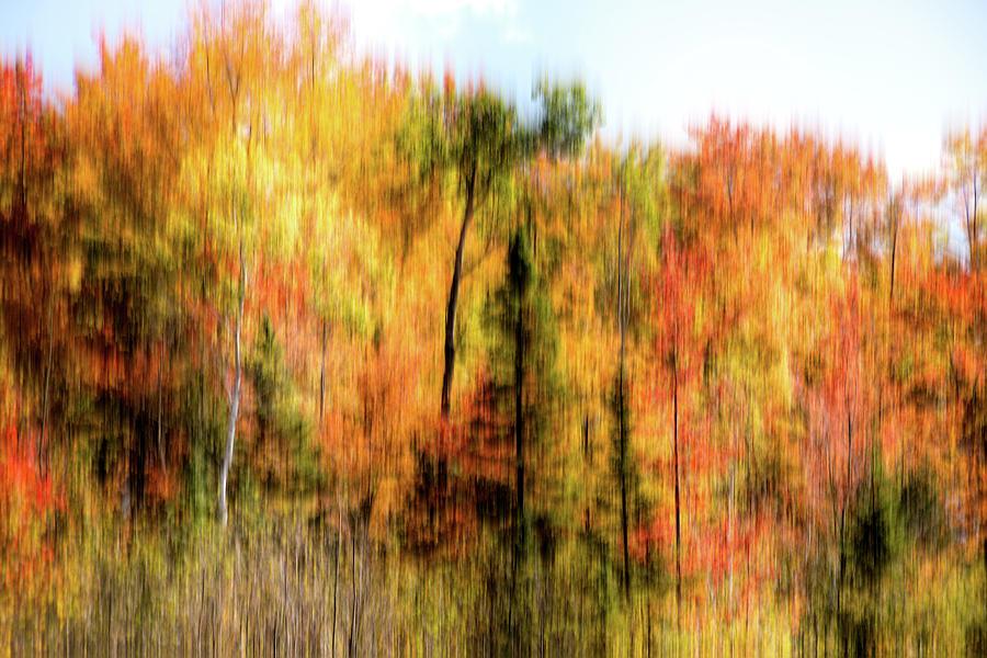 Colorful Autumn Trees Photograph